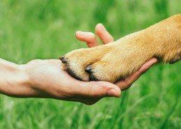 Dog paw and human hand are doing handshake on nature friendship